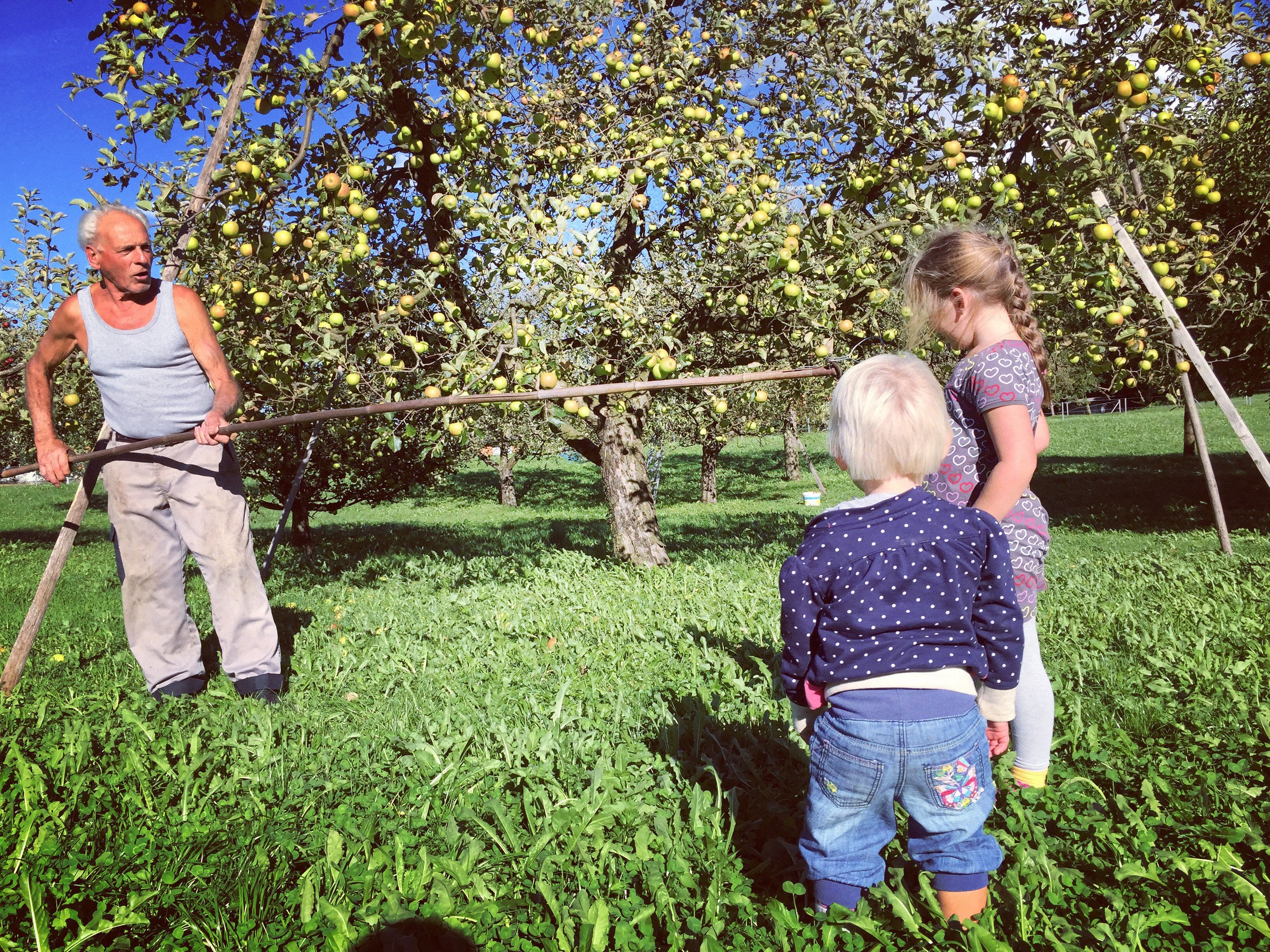De wind ging niet liggen en daarbij was het ook nog eens rond de 25-30 graden, De buurman was zijn appeltjes aan het redden