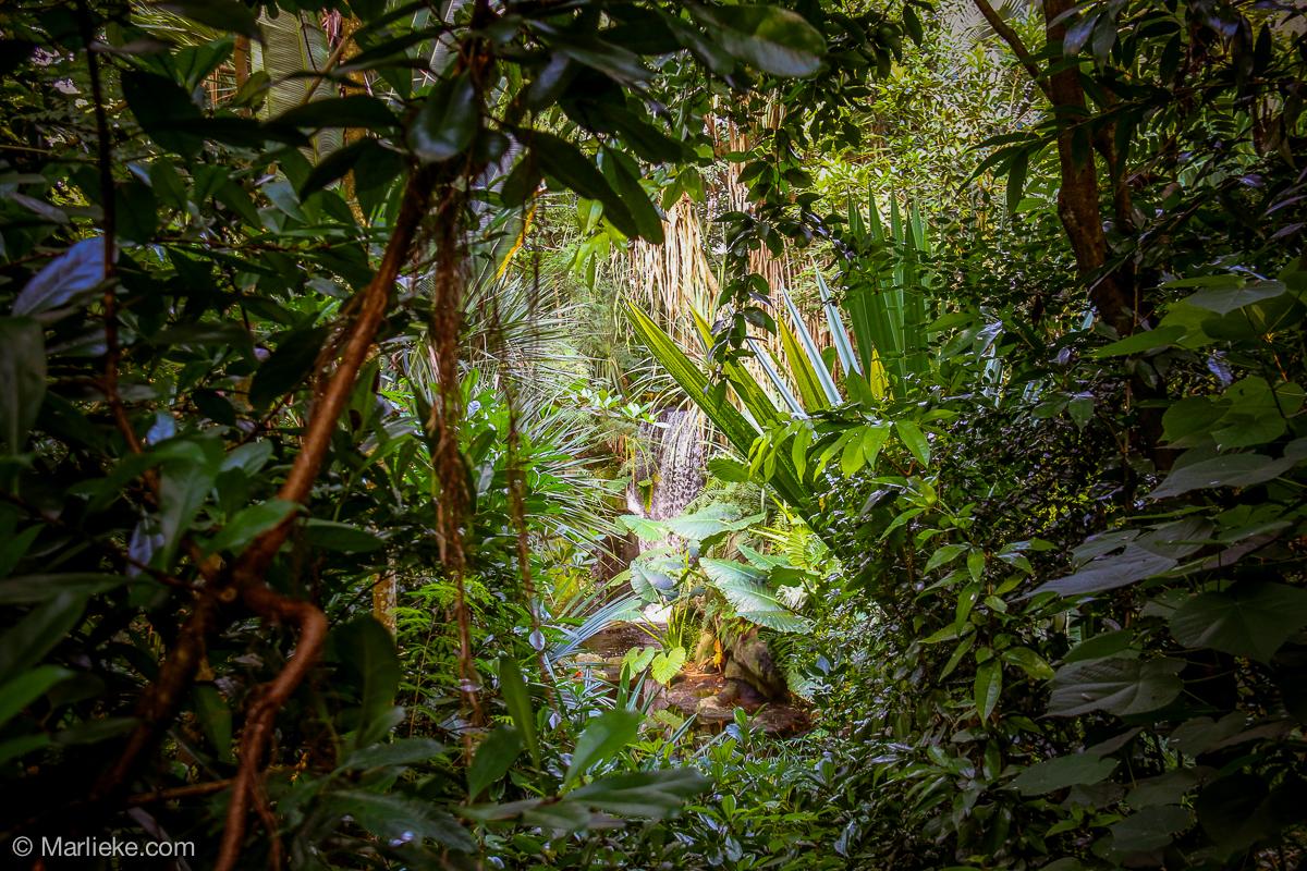 Massaal Regenwald