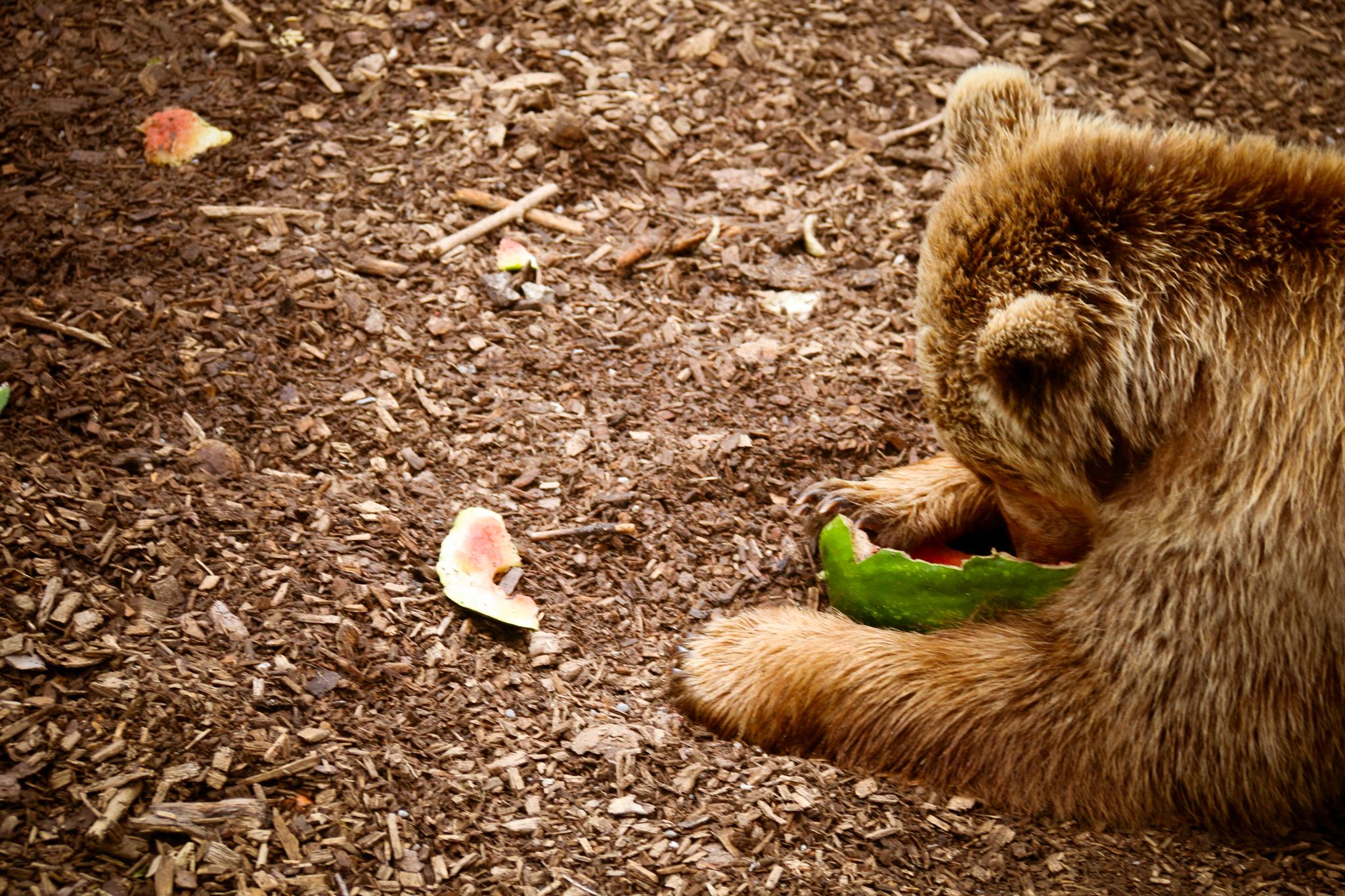 Daar is dan eindelijk een echte beer!