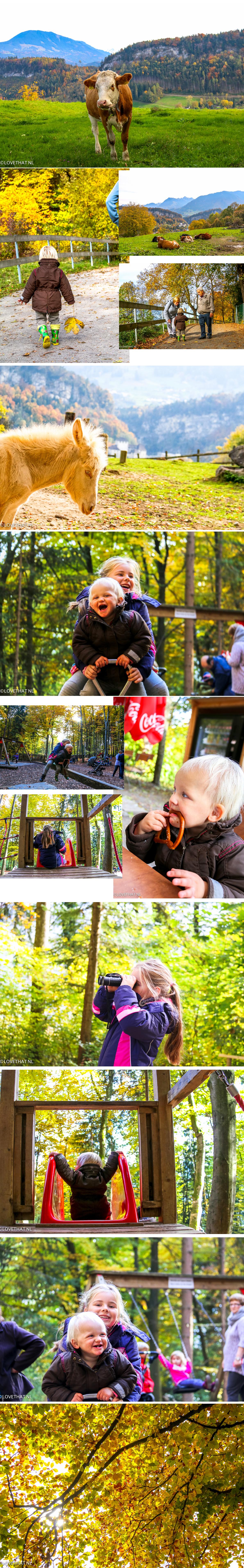 collage-feldkirch-wildpark-herfst