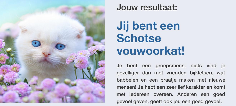 Miauw! Een schotse Vouwoorkat met de naam Belle ofzoiets. Ze zijn in ieder geval wel schattig.