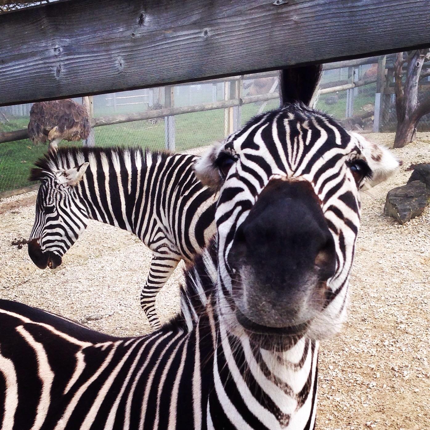 We gingen zondag naar de dierentuin. Daar heb je al alles over kunnen lezen >hier< maar ik had ook nog wat foto's op mijn mobiel staan.