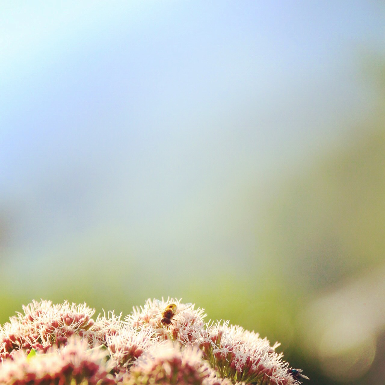 Ik wilde mijn plant snoeien, maar die bleek bevolkt te zijn door bijen en ander gevleugelde beestjes